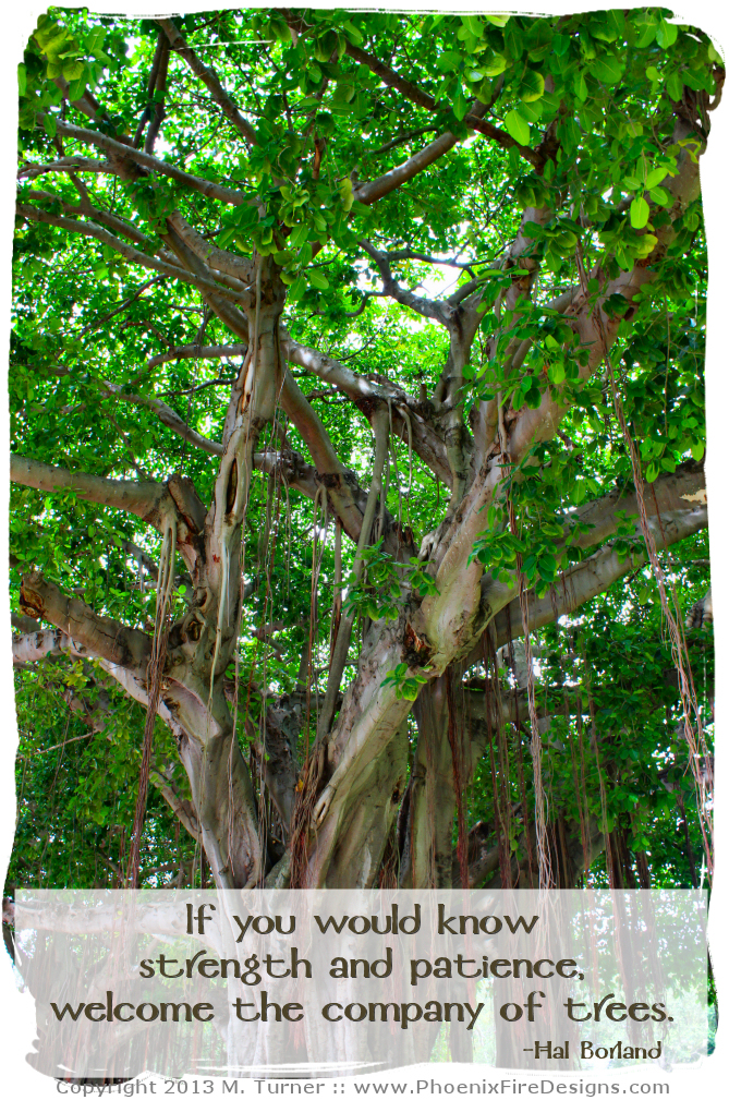 Photo of Banyan Trees in Downtown St. Petersburg Florida with inspirational tree quote.